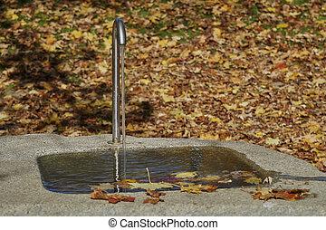 automne, parc fontaine