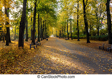 automne, parc, jour ensoleillé, arbres