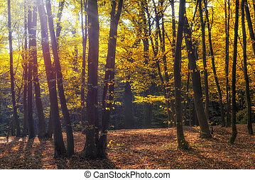 automne, parc, lumière soleil, matin