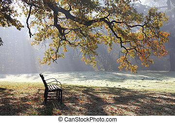 automne, parc, matin