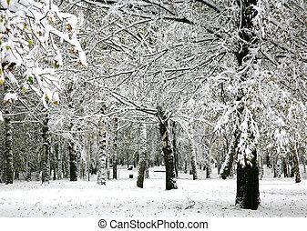 automne, parc, neige
