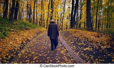 automne, parc, paysage