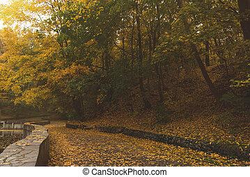 automne, parc, route