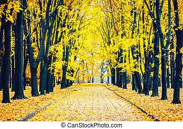 automne, parc, ruelle