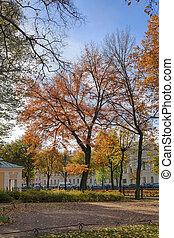 automne, parc, sur, a, jour ensoleillé