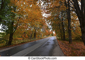 automne, parc, tôt, jour ensoleillé