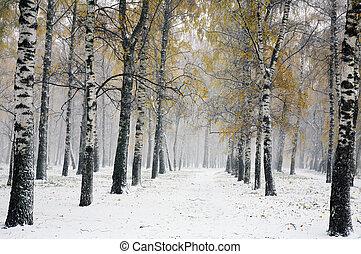automne, parc, tempête neige