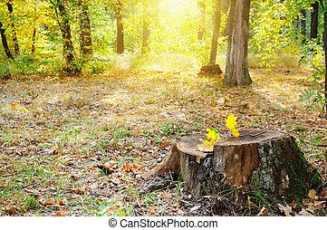 automne, parc, vieux, souche, arbre