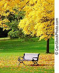 automne, parc ville, érable, banc