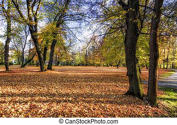 automne, parc ville