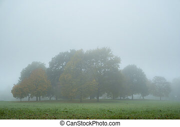 automne, park., brouillard