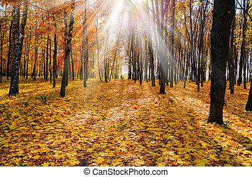 automne, park., feuillage, coloré