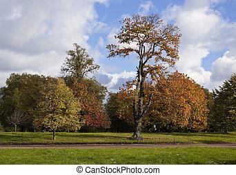 automne, park., londres