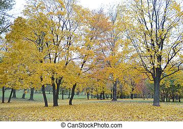 automne, park.