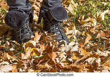 automne, park., promenade