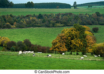 automne, pays, paysage