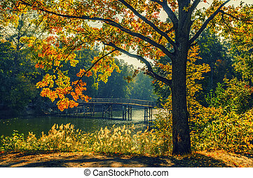 automne, paysage, à, lac