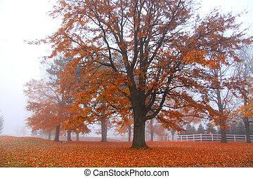 automne, paysage brumeux