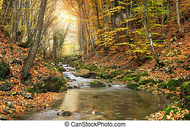 automne, paysage.