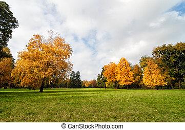 automne, pelouse, parc