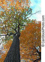 automne, perspective