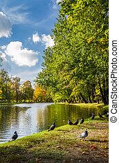 automne, pigeons, rivière, parc