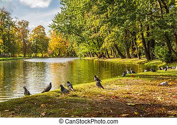 automne, pigeons, rivière, parc, troupeau