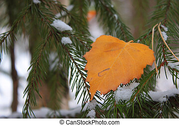 automne, pine-tree, feuille