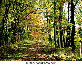 automne, piste