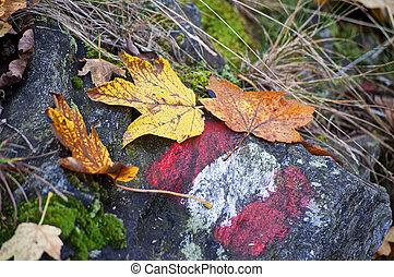 automne, piste, randonnée, signe