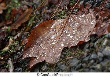 automne, pluie