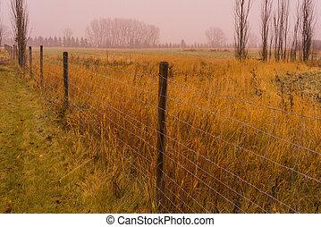 automne, pluvieux, prairie