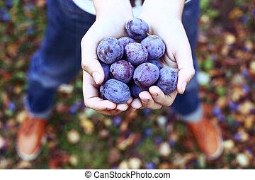 automne, poignée, prunes, jardin, fond