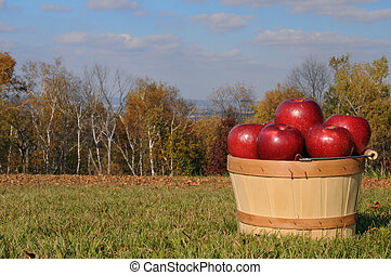 automne, pommes