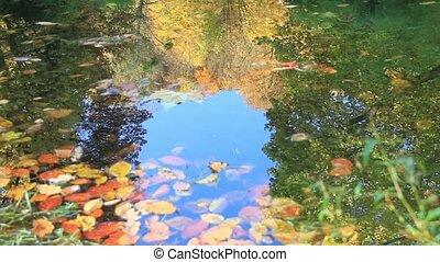 automne, pond., ondulations