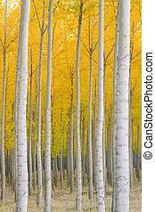 automne, position arbres, ardent, jaune, automne, couleur chute