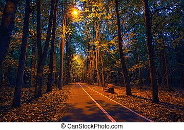 automne, poussière, parc, chemin