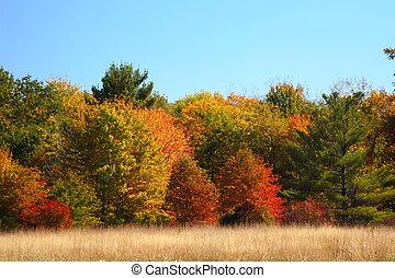 automne, pré