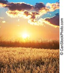 automne, prairie