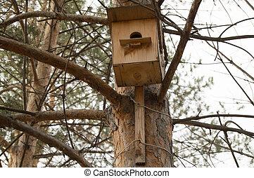 automne, printemps, arbre, parc, pendre, birdhouse