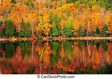 automne, réflexions, forêt