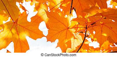 automne, résumé