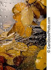 automne, rain.