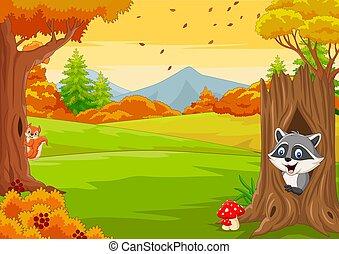 automne, raton laveur, dessin animé, écureuil, forêt