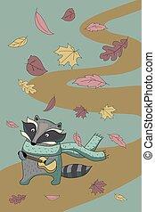 automne, raton laveur