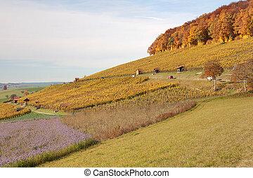 automne, regio, vine-yard, scène