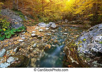 automne, rivière