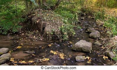 automne, rivière, forêt, ruisseau