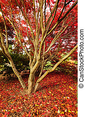 automne, rouges, gloire, moquette