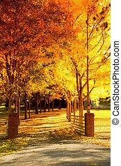 automne, ruelle